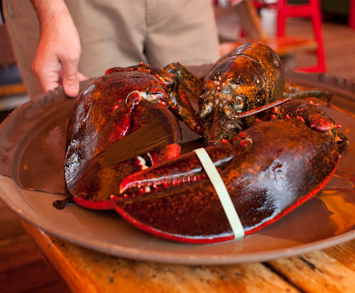 Fooding on the Road - 10 Pound Lobster at the Barking Crab - The Tasting Buds | Austin Food Blog