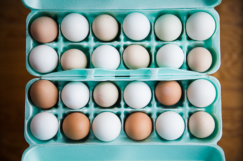 farm egg